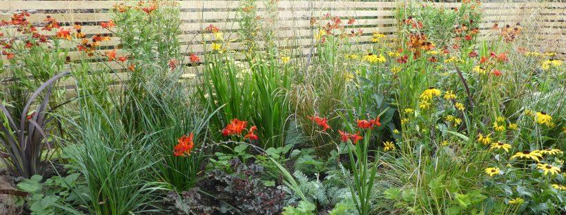 August Flowering border
