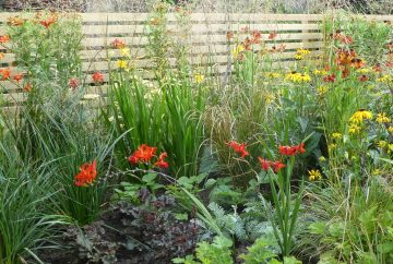 Fence and Planting