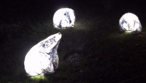 Wakehurst Glow Wild Badgers