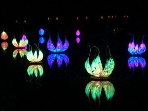Wakehurst Glow Wild lanterns