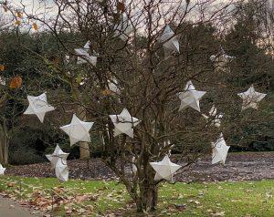 Wakehurst Glow Wild stars in trees