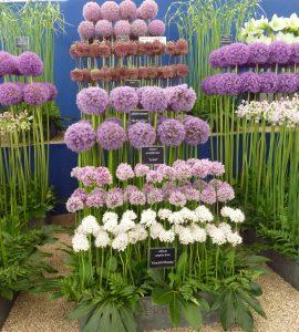 Garden Nursery display
